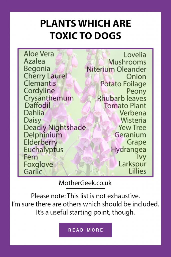 a list of plants which are toxic to dogs