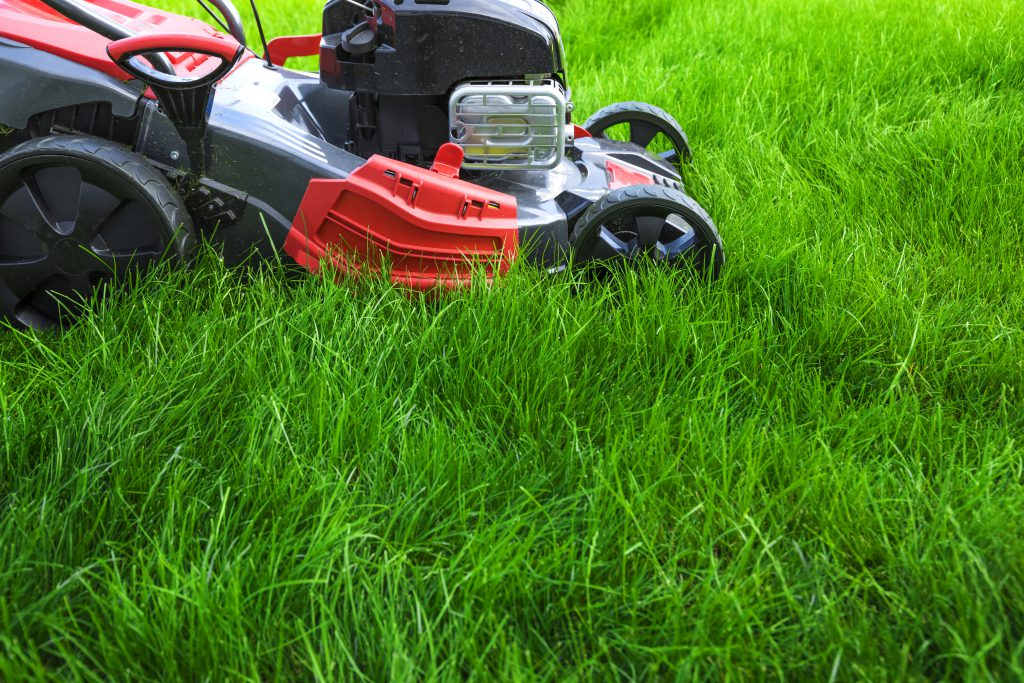 Updating The Front Garden On A Budget - lawn mower on long grass