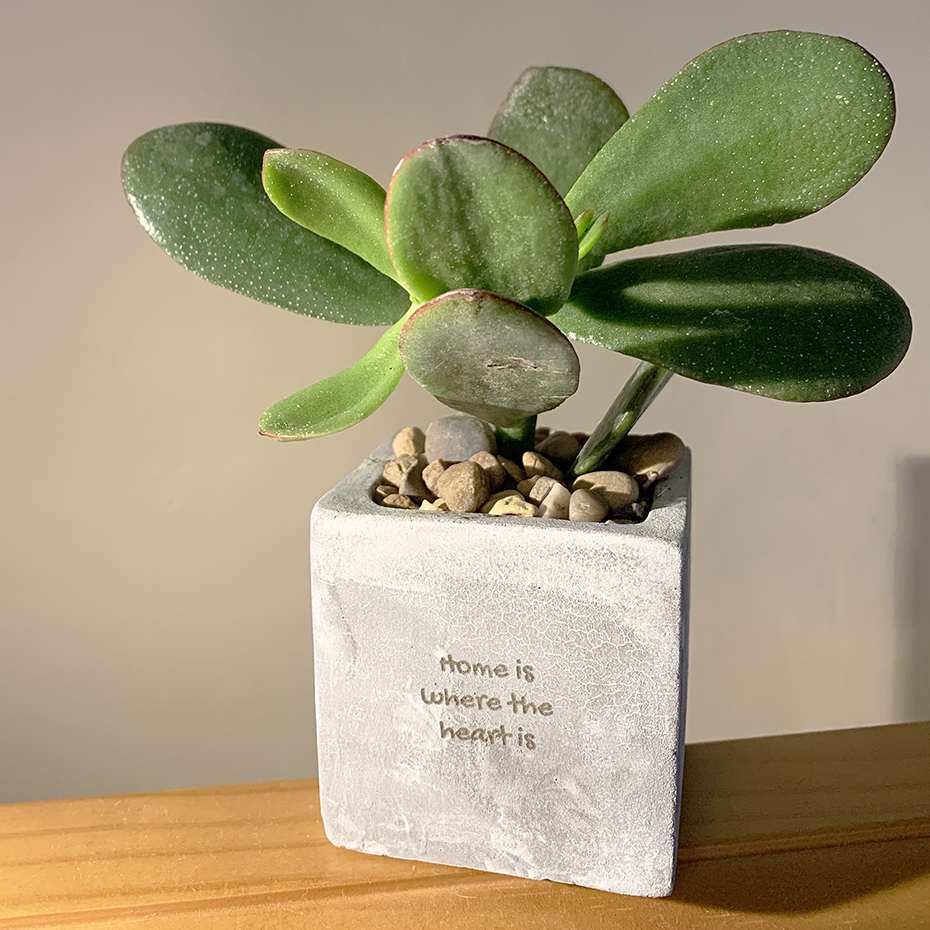 Rear of personalised succulent from hey pots